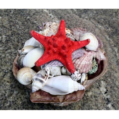 Seaich Lion Paw Sea Shell Pack