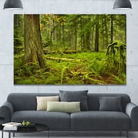Designart 'Lush Rainforest in Cathedral Grove' Landscape Wall Art on Canvas - Multi-color