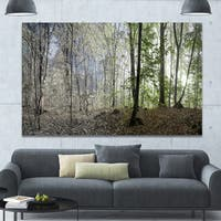 Designart 'Green Morning in Forest Panorama' Landscape Large Canvas Art Print - Green