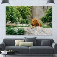 Design Canvas Art Print 'Big Lion Lying On Stones in Zoo' Extra Large Landscape Canvas Art Print - Multi-color