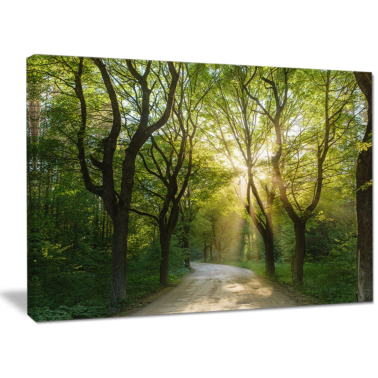 Designart Evening In Green Forest Extra Large Landscape Canvas Art Print On Sale Overstock 14557756