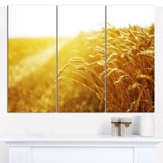 Designart 'Bright Sunset over Wheat Field' Landscape Canvas Wall Artwork - 3 Panels 36x28