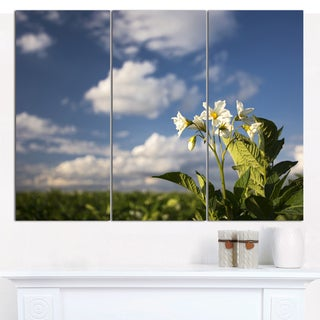 Designart 'Potato Plant Flowers' Multipanel Landscape Canvas Art Print - 3 Panels 36x28