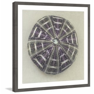 'Sea Urchin Shell' Framed Painting Print