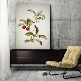 Wexford Home 'Botanical Plate XVIII' Canvas Wall Art
