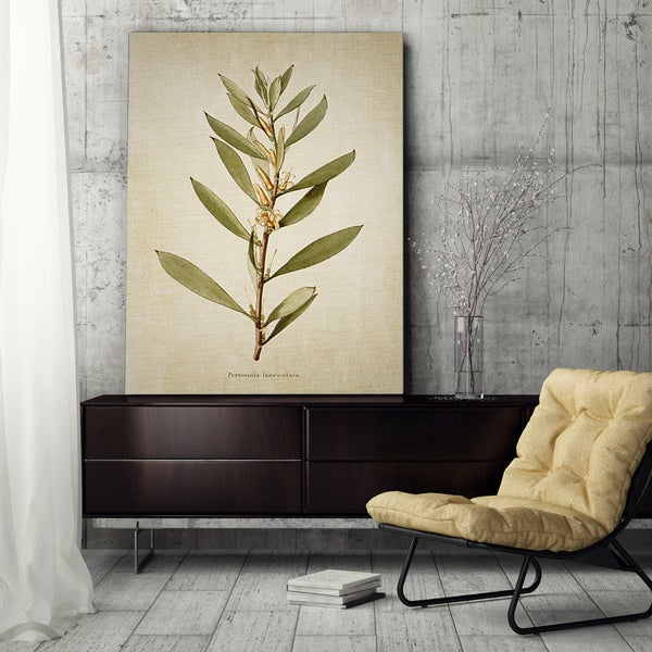 'Botanical Plate XVII' Gallery-wrapped Canvas Art