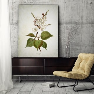 Wexford Home 'Botanical Plate XIII' Gallery Wrapped Canvas