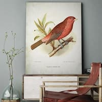 Wexford Home 'Aviary Sketch I' Gallery-wrapped Canvas Art - multi