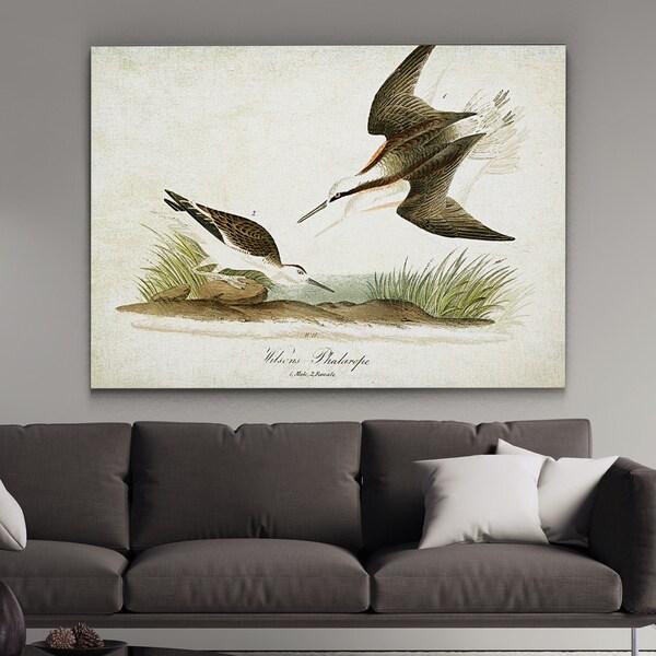 Wexford Home 'Aviary Plate XXI' Wall Art