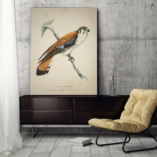 Wexford Home 'Aviary Plate VI' Wrapped Canvas Art
