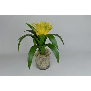 Green and Yellow Bromeliad in Clear Glass Jar