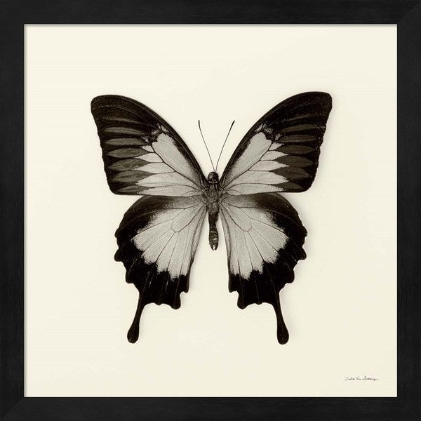 Debra Van Swearingen 'Butterfly III' Framed Art
