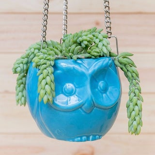 Handmade Hanging Owl Ceramic Planter (Colombia)