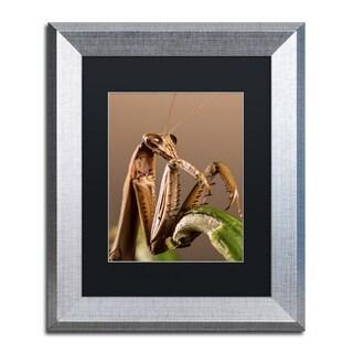 Jason Shaffer 'Praying Mantis & Pepper' Matted Framed Art