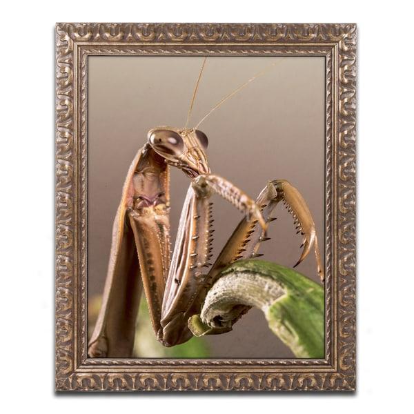 Jason Shaffer 'Praying Mantis & Pepper' Ornate Framed Art - White
