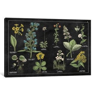 iCanvas Botanical Floral Chart I by Wild Apple Portfolio Canvas Print