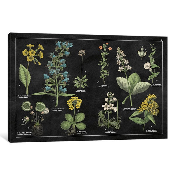 iCanvas Botanical Floral Chart I by Wild Apple Portfolio Canvas Print