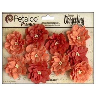 Petaloo Darjeeling Coll Dahlias Teastain Spice
