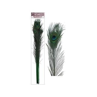 Zucker Kelly 30-40-inch 10-piece Peacock Eyes Feathers and Stems