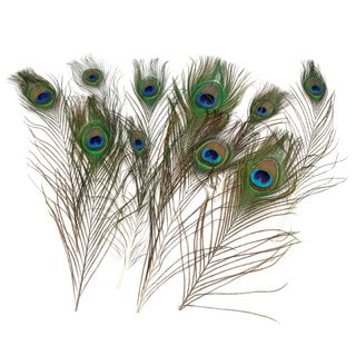 Real 10-12 Inch Natural Tail Eyes Peacock Feathers (Pack of 100)