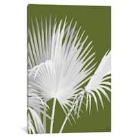 iCanvas 'Fan Palm IV' by Fab Funky Canvas Print