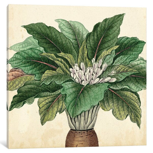 Shop iCanvas \'Garden Bounty V\' by Vision Studio Canvas Print - On ...