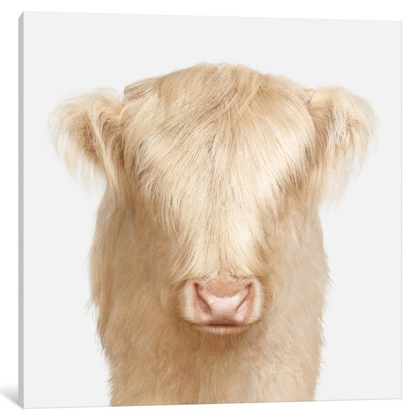 iCanvas 'Highland Cow Babe' by Randal Ford Canvas Print
