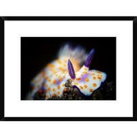 Global Gallery, Barathieu Gabriel 'Nudibranche' Framed Giclee Print