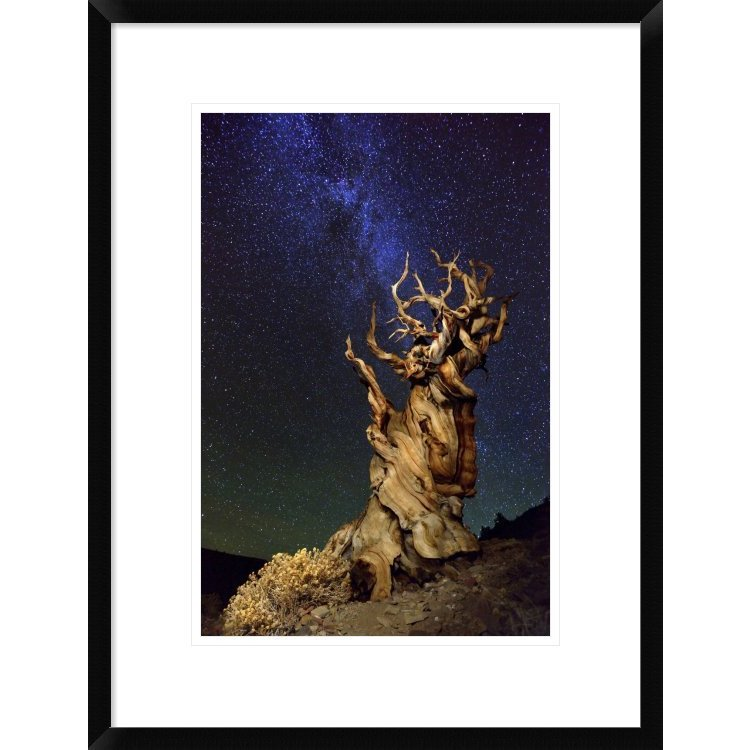 Global Gallery, Tanja Ghirardini 'Bristlecone Pine' Frame...