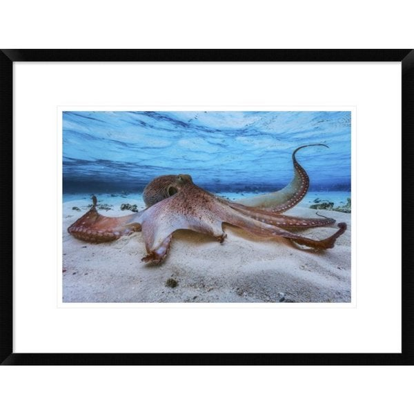 Global Gallery, Barathieu Gabriel 'Octopus' Framed Giclee Print