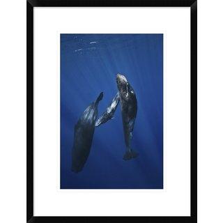 Global Gallery, Barathieu Gabriel 'Sperm Whale Family' Framed Giclee Print