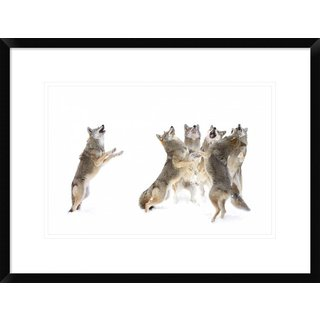 Global Gallery, Jim Cumming 'The Choir Coyotes' Framed Giclee Print