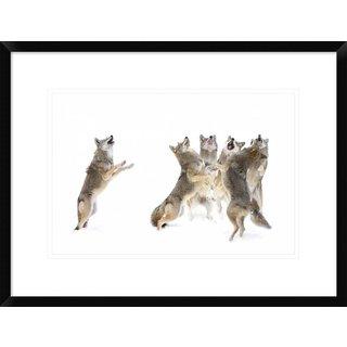 Global Gallery, Jim Cumming 'The Choir Coyotes' Framed Giclee Print