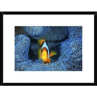 Global Gallery, Barathieu Gabriel 'Clownfish In Blue Anemone' Framed Giclee Print