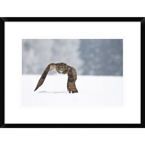 Global Gallery, Milan Zygmunt 'Eurasian Eagle-Owl' Framed Giclee Print