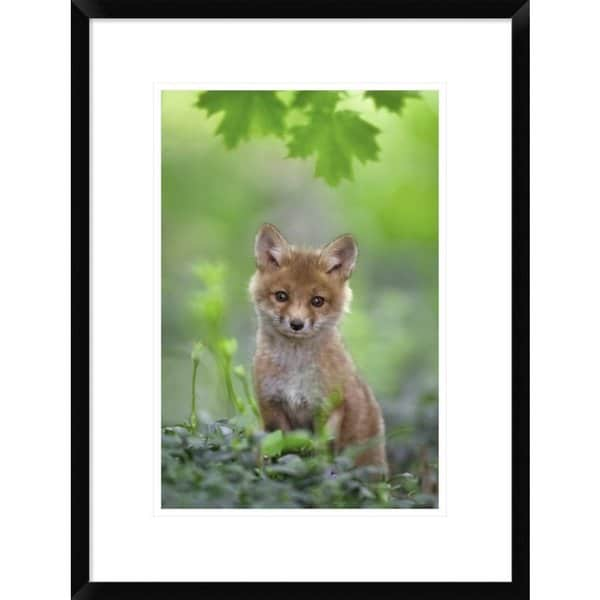 Global Gallery, Nick Kalathas 'Red Fox Pup' Framed Giclee Print