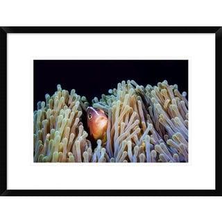 Global Gallery, Barathieu Gabriel 'Clownfish' Framed Giclee Print