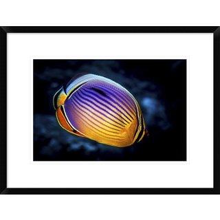 Global Gallery, Barathieu Gabriel 'Butterflyfish' Framed Giclee Print