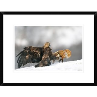 Global Gallery, Yves Adams 'Golden Eagle And Red Fox' Framed Giclee Print