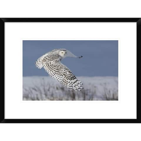Global Gallery, Mircea Costina 'Snowy Owl' Framed Giclee Print