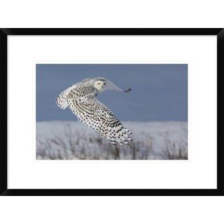 Global Gallery, Mircea Costina 'Snowy Owl' Framed Giclee Print