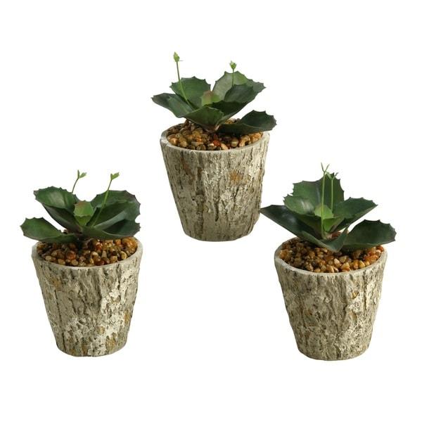 D&W Silks Wild Succulent in Cement Planter (Set of 3)