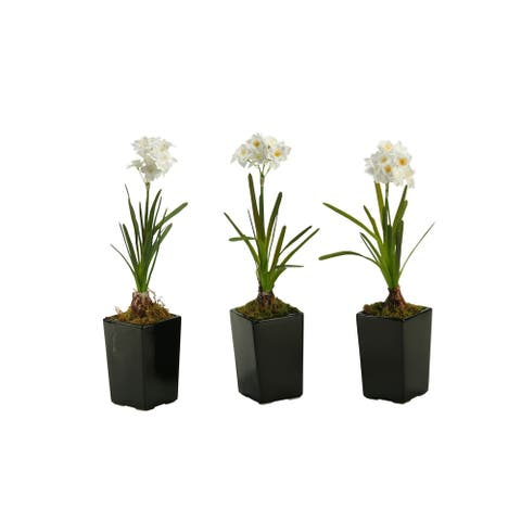 D&W Silks Paper White Bulb in Square Ceramic Planter (Set of 3)