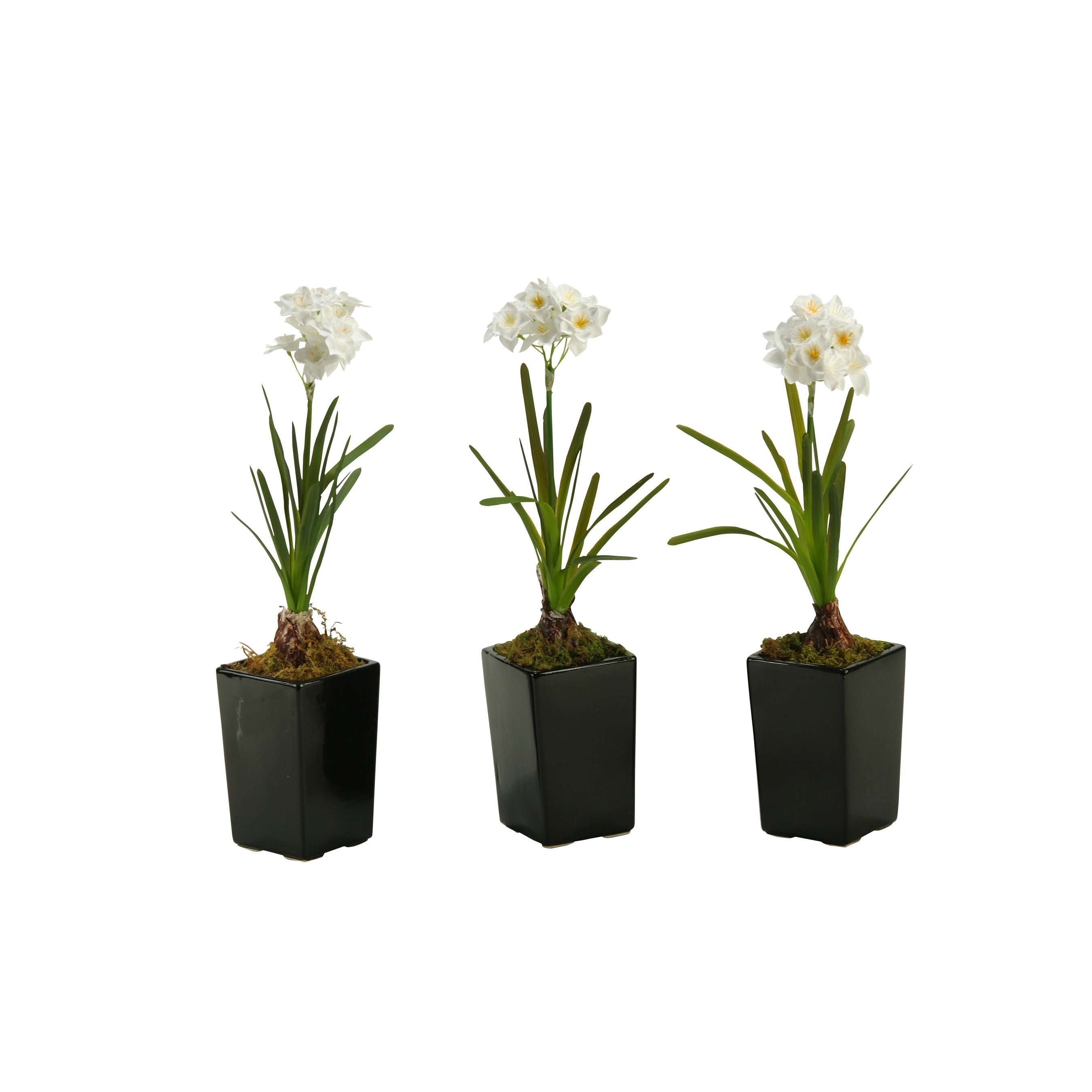 D&W Silks Paper White Bulb in Square Ceramic Planter (Set of 3) (Planter)