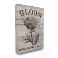Bloom Where You're Planted Vintage Flower Line Drawing Stretched Canvas Wall Art
