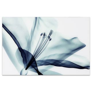 """Amaryllis"" Frameless Free Floating Tempered Glass Panel Graphic Wall Art"