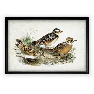 Aviary Sketch XIII - Black Frame