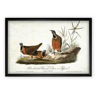 Aviary Sketch II - Black Frame
