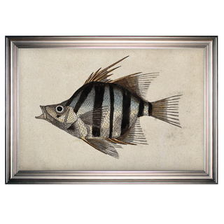Link to Vintage Fish Study II -Silver Frame Similar Items in Canvas Art