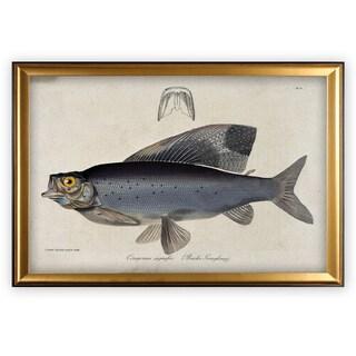 Vintage Fish Study I - Gold Frame